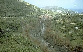 Vegetation burned by pyroclastic flow along stream channel, Soufriere            Hills volcano in Monsterrat
