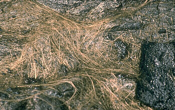 Photo: pele's hair on surface of lava flow at Kilauea Volcano, Hawai`i