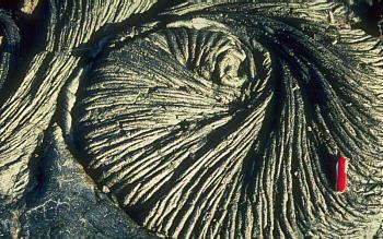 Photo: pahoehoe lava coil, Kilauea Volcano, Hawai`i