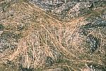 Tephra sample: Pele's hair, Kilauea Volcano