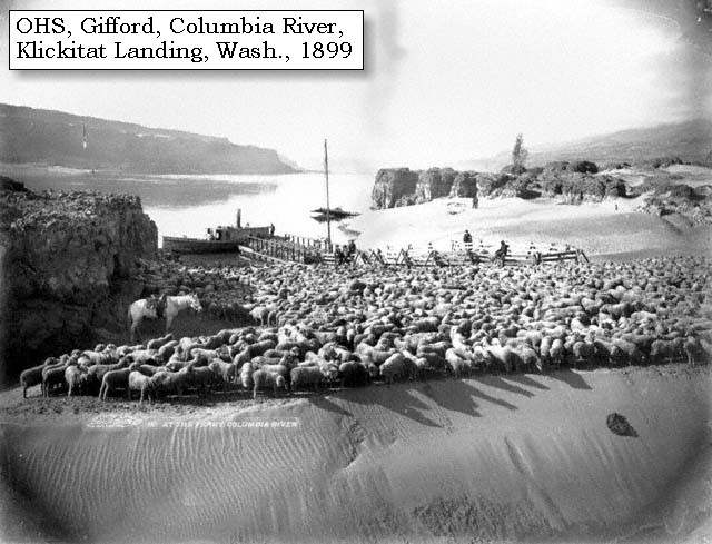 a survey of the early history of sheep and wool Sheep are raised for both meat (lamb or mutton) and wool the us sheep and wool industries have seen significant change since the mid-1970s, marked by smaller inventories, declining production, shrinking revenues, and fewer operations.