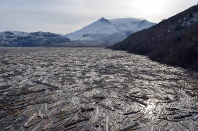 Logs Floating in Spirit Lake, Mount St. Helens in the background. (Click image to view full size.)